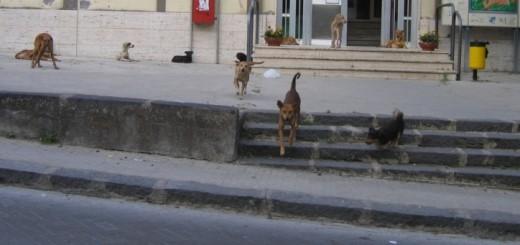 cani in comune