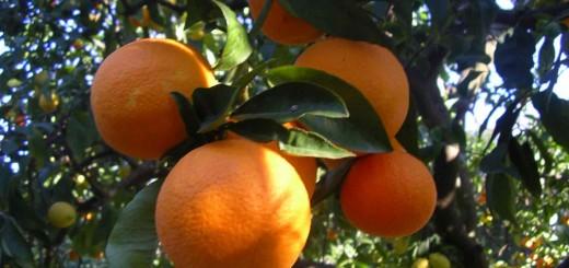 giardino-arance-dal-vivo-vi1-1024x768