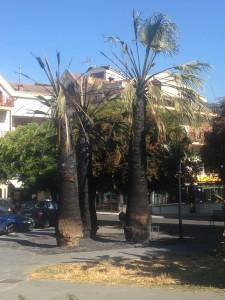 Foto 3 palme